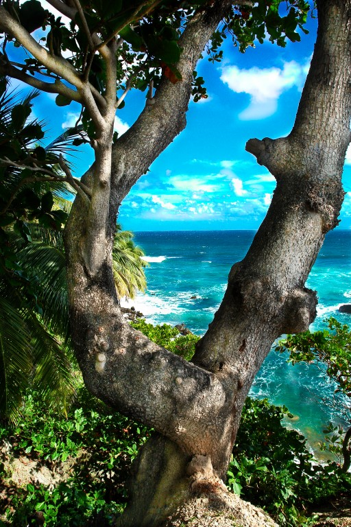 Las Terrenas Views – Sea & Trees